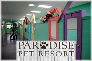 Paradise Pet Resort & Spa ed